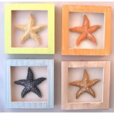 4 Starfish Shadow Boxes
